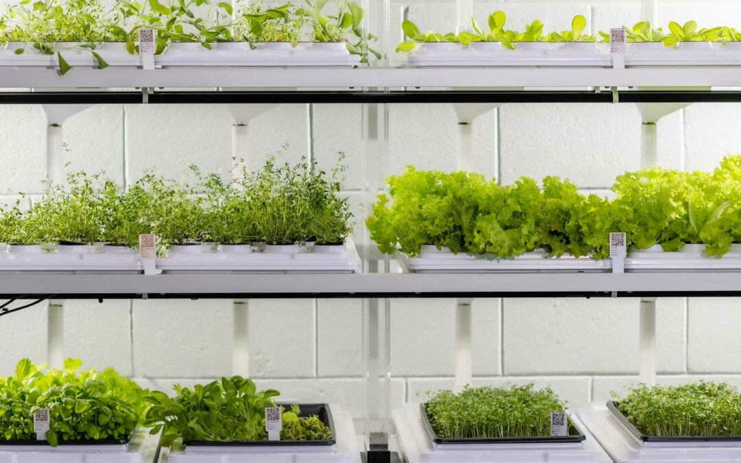 Grant awarded to distributed vertical farming platform